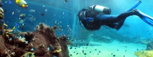 scuba-diving-turks-and-caicos-activities
