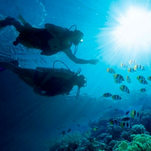 scuba-diving-turks-and-caicos-fish